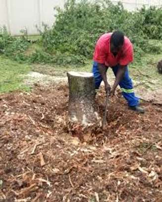 Tree cutting & Site Clearance -Free Quotes image 9