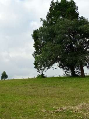 1/8 acre plot for sale in kamirithu Limuru