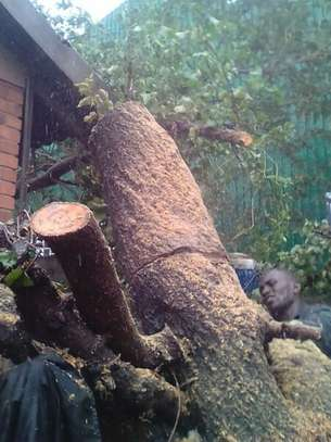 Tree Felling Services, Palm Tree Cleaning and Stump Removals image 5