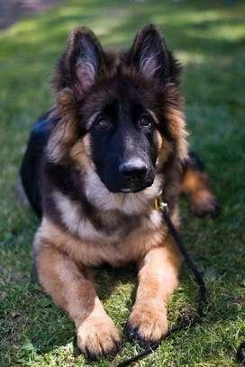 Karimz Pet Shop image 12