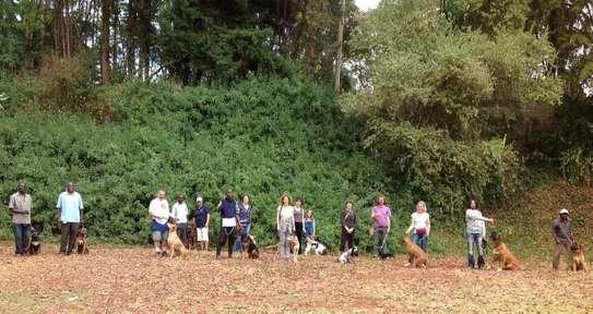 Dog Training: Basic Obedience