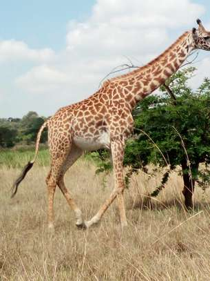 Nairobi Day Tour - 3 Sanctuaries to visit
