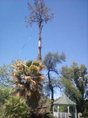 Tree Cutting services - Competitive Tree Felling Removal.Call And Get Free Quote Now. image 1