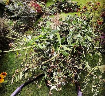 Garden Maintenance Services image 2