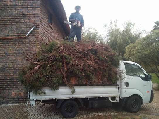 Professional Tree Cutting/Tree Experts  Tree Removal, Tree Trimming. image 4
