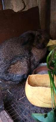 Rabbits image 4
