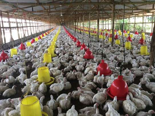 Automatic bell drinker for poultry image 9