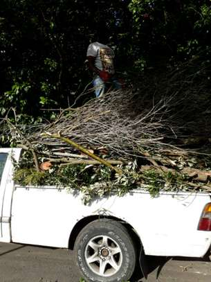 Tree Trimming Services in Nairobi.100% Satisfaction Guarantee. Call now! image 3