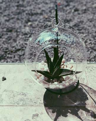 Terrariums in kenya