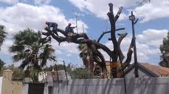 Tree cutting & Site Clearance -Free Quotes image 4
