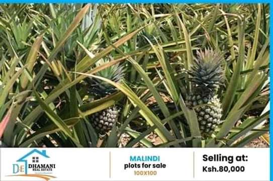 Buying Plots at Malindi Kenya image 2
