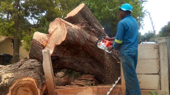 Bestcare Tree Services – Tree felling & Tree Cutting Company image 1