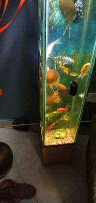 Classic tower aquarium image 2