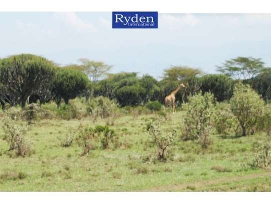 land for sale in Naivasha East image 6