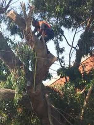Tree Experts - Tree Felling and Tree Care.Service Guaranteed image 1