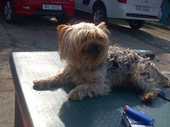We offer safe, comfortable mobile pet grooming services image 5