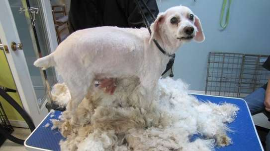 Dog Grooming & Cleaning Services.High Quality And Guaranteed Service.Call Now,Free Quote. image 3