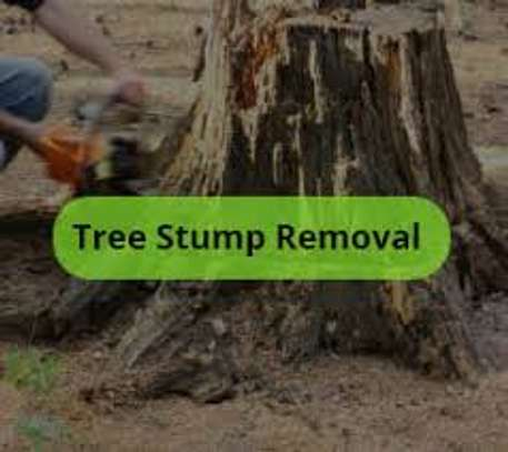 Tree cutting & Site Clearance -Free Quotes image 7