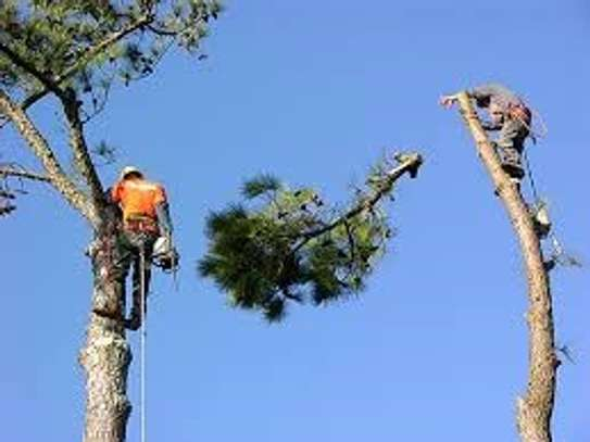 Expert Tree Cutting, Removal, Landscaping & Gardening Services