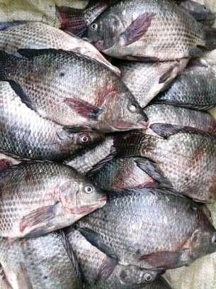 Fish supplies image 1