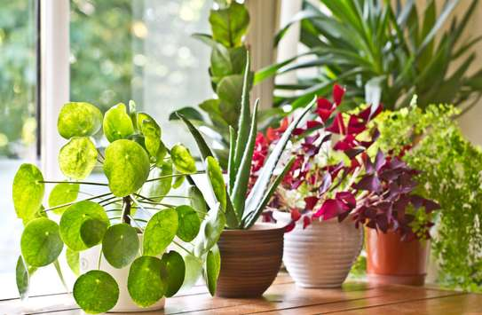Office plant service and maintenance/ Landscaping & Gardening Services image 4