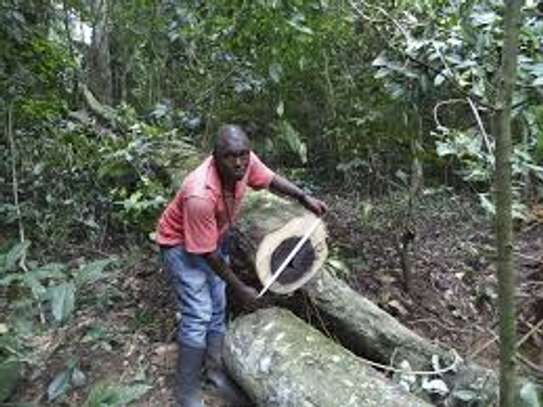 Tree Felling, Stump Uprooting, Rubble Removal and Clearing Services