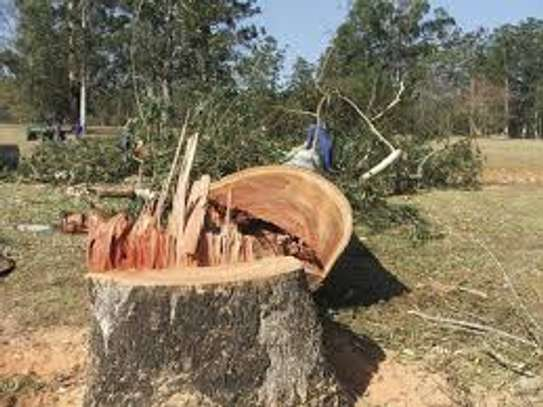 Cheap Tree Cutting Services Nairobi and Surrounding. image 6