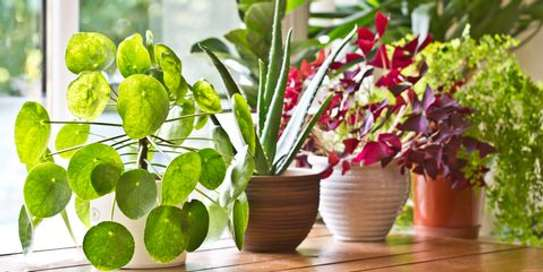 Office plant service and maintenance/ Landscaping & Gardening Services image 5