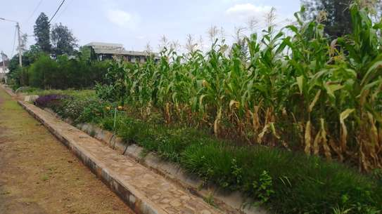 0.5 ac residential land for sale in Thome image 4