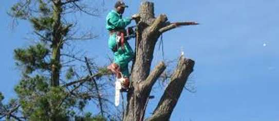 Tree Experts - Tree Felling and Tree Care.Service Guaranteed image 5