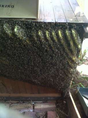 Are you experiencing a Bee Infestation? We can help you! image 4