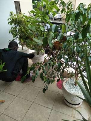 Garden Maintenance Services image 7