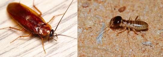 Sale of a pest control business image 1