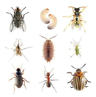Best Pest Control (Bedbugs, Insects, Rodents, Termites) Professionals Nairobi image 3