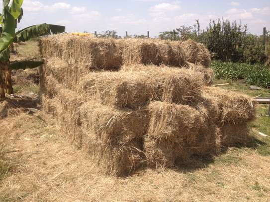 Fresh Hay image 2