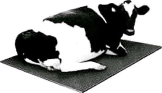 Cow Mattresses/Carpet