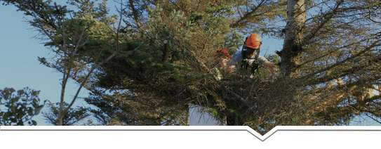 24 HR Emergency Tree cutting/Tree Removal/Tree Pruning/ Fast & affordable image 14