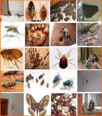 Best Pest Control (Bedbugs, Insects, Rodents, Termites) Professionals Nairobi image 12