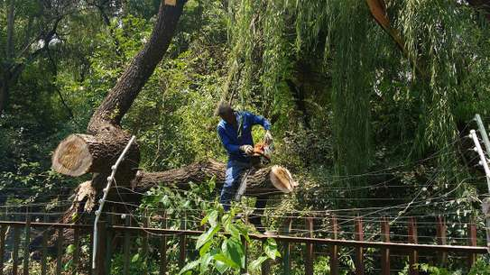 Bestcare Tree Services – Tree felling & Tree Cutting Company image 5