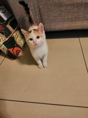 Nala is a cute fluffy kitten