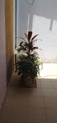 Accommodation available in ruiru BED AND BREAKFAST in kamakis area image 15