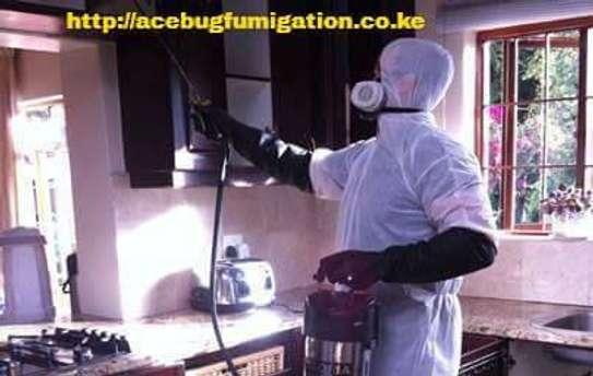 Acebug Fumigation Company image 9