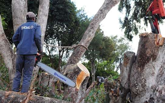Best Handyman/Plumbing/Carpentry/Painting & Masonry Services Nairobi image 12