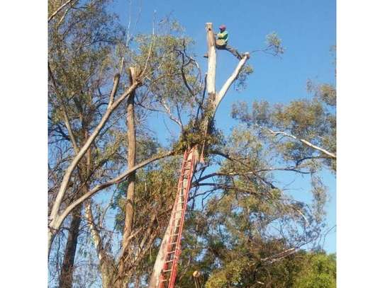 24 HR Emergency Tree cutting/Tree Removal/Tree Pruning/ Fast & affordable image 1