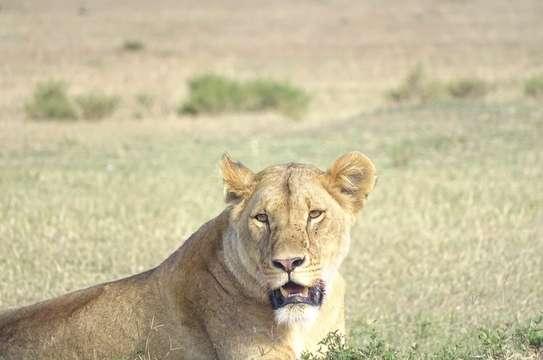 Nairobi National Park Day Trip image 1