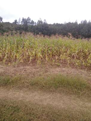 0.05 ha residential land for sale in Kikuyu Town image 4