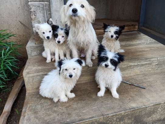 Maltese puppies sale!