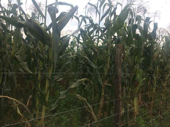 10 Acres For sale in Nangili Likuyani sub county of Kakamega image 5
