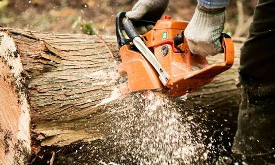 TREE  CUTTING SERVICES - Competitive Tree Felling and timber cutting.Call And Get Free Quote Now. image 2