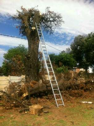 24 HR Emergency Tree cutting/Tree Removal/Tree Pruning/ Fast & affordable image 4